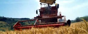 Azienda agricola: tutto ciò che bisogna da sapere